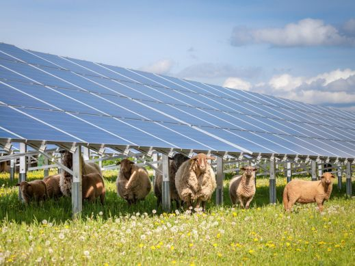 Solar, Agriculture, Sheep, PV,